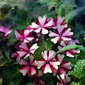 Pink Asterisk 6518 Idp_2 by Steven Ward