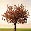 Pink Blossom Tree by Zap Art