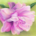 Pink Camellia With Leaves by MM Anderson