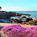 Pink Ice Plants Grace The Shoreline by Elfi Kluck