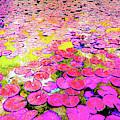 Pink Lily's by Sean Dorazio