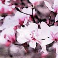 Pink Magnolia In Watercolor by Susan Maxwell Schmidt