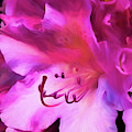 Pink O'keefe by Cindy Greenstein