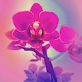 Pink Orchid  by Rachel Hannah