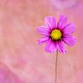 Pink Pink Pink by Sabrina L Ryan