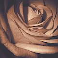 Pink Rose Petals 0219 by Howard Roberts