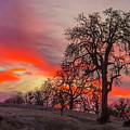 Pink Sunrise by Jonathan Hansen