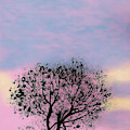 Pink Sunset by D Hackett