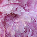 Pinkity by Cindy Greenstein