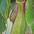 Pitcher Plant by Deborah Benoit