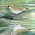 Plover Reflections by Tish Wynne