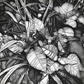 Poinsettia In Black And White by Luther Fine Art