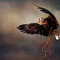 Poised For Flight by Susan Rissi Tregoning