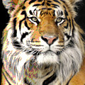 Polarized Bengal Tiger  by Doc Braham