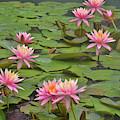 Pond Decor by Jamart Photography