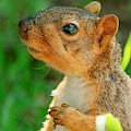 Pondering Squirrel by Don Northup