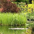Pond Reflections In Monet's Garden by E Faithe Lester
