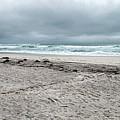 Ponquogue Beach by Judy Hall-Folde