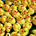 Pool Of Duckies by Todd Klassy