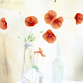 Poppies In Vases by Victoria Pearson