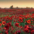 Poppy Field Sunrise 2 by James Billings
