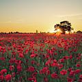 Poppy Field Sunrise 3 by James Billings