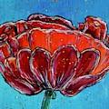Poppy Flower by Jacqueline Athmann