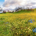 Pops Of Baby Blue Eyes At Shell Creek - Superbloom 2019 by Lynn Bauer