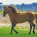 Portrait Of Wild Horse  Paintography by Dan Friend