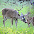 Precious Moments In Time by Lynn Bauer