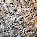 Prednisone Inferno by Vallee Johnson