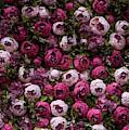 Pretty Floral Pattern by Jaroslaw Blaminsky
