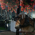 Pretty Flowers And Horse by Dan Friend