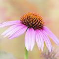Pretty Pink Echinacea by Sabrina L Ryan