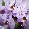 Pretty Purple Petals Abstracted 8 by Lynda Lehmann