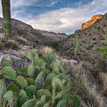Prickly Pear Hillside by Dave Dilli
