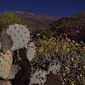 Prickly Pear Moonlight by Chance Kafka