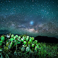 Prickly Pear Under The Milky Way by David Morefield