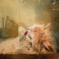 Primping by Jai Johnson