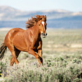 Proud And Free - Wild Mustang Horse by Judi Dressler