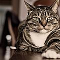 Proud Cat by Olga Tremblay