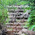 Psalms 1/3 by Tony Baca