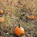 Pumpkin Farm by Whitney Leigh Carlson