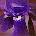 Purple Iris Portrait by Robert G Kernodle