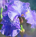 Purple Iris Watercolor by Anna Louise