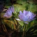 Purple Lotus Blossoms 4713 Idp_2 by Steven Ward