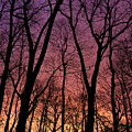 Purple Orange Sky by Paula Guttilla