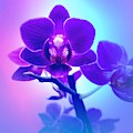 Purple Orchid  by Rachel Hannah