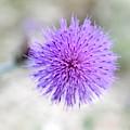 Purple Peace by Sheridan Jones