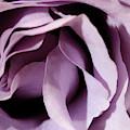 Purple Rose Abstract 2 by Angela Murdock